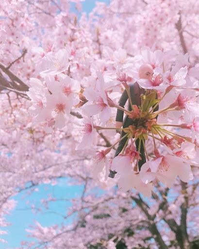 ガルエージェンシー富士 ガルフ写真